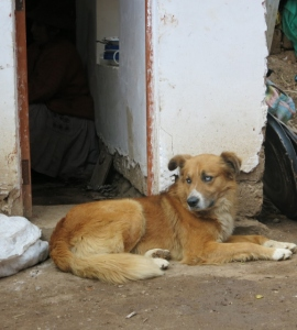 Stories of Peru