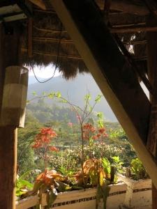 Tree Top Paradise Peru - Wild Star Landing