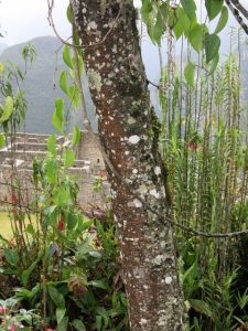 Flora at Machu Picchu
